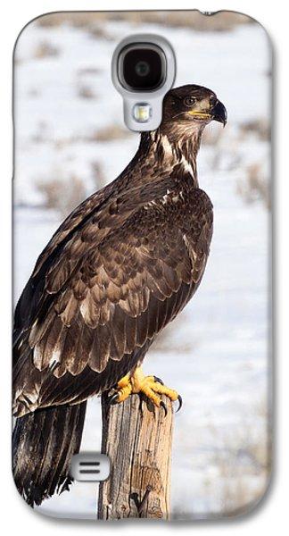Golden Eagle On Fencepost Galaxy S4 Case