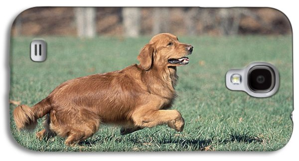 Golden Retriever Running Galaxy S4 Case by David Davis
