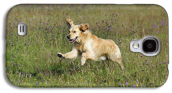 Golden Retriever Running Galaxy S4 Case by John Daniels