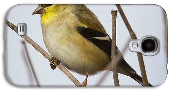 Galaxy S4 Case featuring the photograph Goldfinch In It's Winter Coat by Ricky L Jones