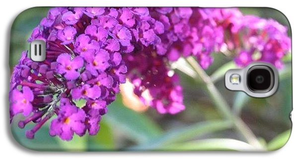 Good Morning Purple Butterfly Bush Galaxy S4 Case