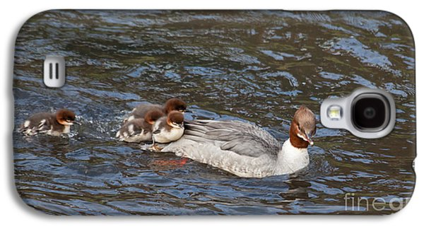 Goosander / Common Merganser  With Fluffy Ducklings Galaxy S4 Case by Liz Leyden