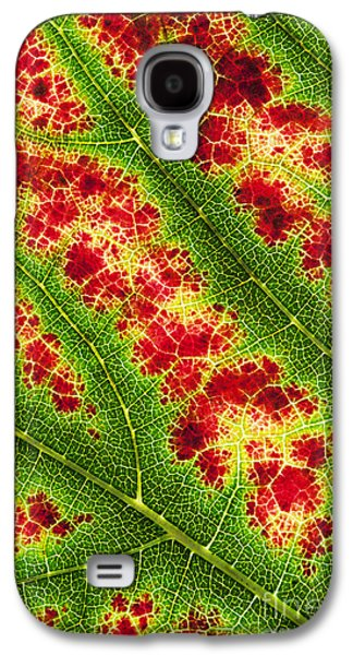 Grape Leaf Pattern Galaxy S4 Case by Tim Gainey