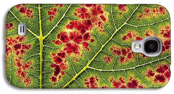Grape Leaf Texture Galaxy S4 Case by Tim Gainey