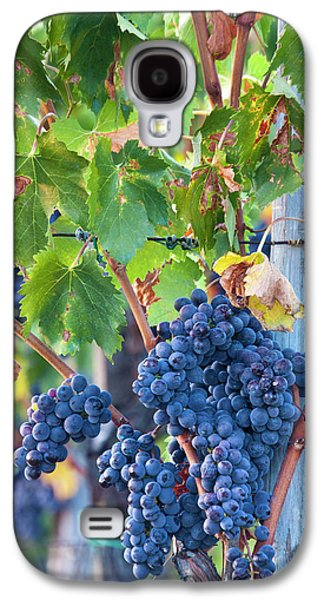 Grapes Ready For Harvest On The Tuscan Galaxy S4 Case