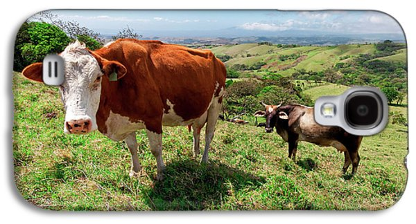 Grass Fed Cattle, Costa Rica Galaxy S4 Case by Susan Degginger
