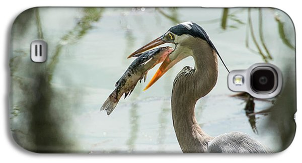 Great Blue Heron With Fish In Mouth Galaxy S4 Case by Sheila Haddad