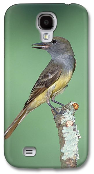 Great Crested Flycatcher Myiarchus Galaxy S4 Case