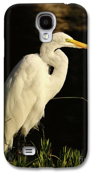 Great Egret At Morning Galaxy S4 Case
