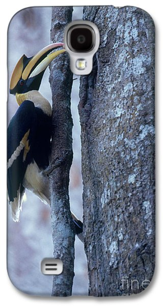 Great Hornbill Galaxy S4 Case by Art Wolfe
