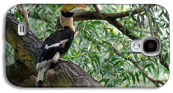 Great Indian Hornbill Galaxy S4 Case by Art Wolfe