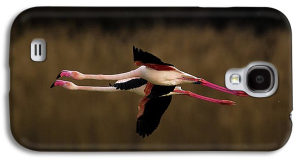 Greater Flamingo Galaxy S4 Case