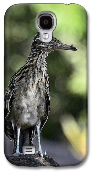 Greater Roadrunner  Galaxy S4 Case by Saija  Lehtonen