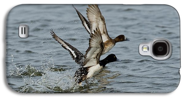 Greater Scaup Pair Galaxy S4 Case by Anthony Mercieca