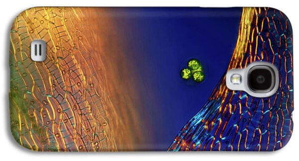 Green Algae And Sphagnum Moss Galaxy S4 Case
