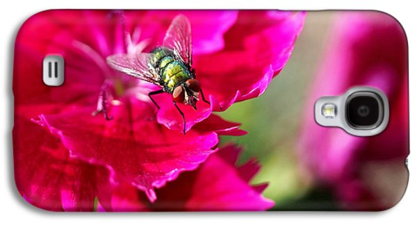 Green Bottle Fly On Dianthus  Galaxy S4 Case by Rona Black