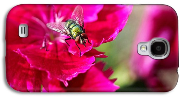 Green Bottle Fly On Dianthus  Galaxy S4 Case