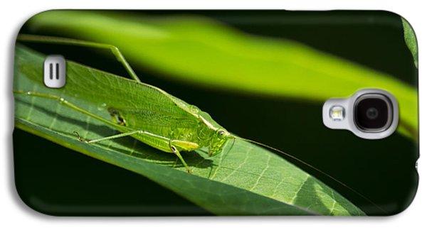 Green Katydid Galaxy S4 Case by Christina Rollo