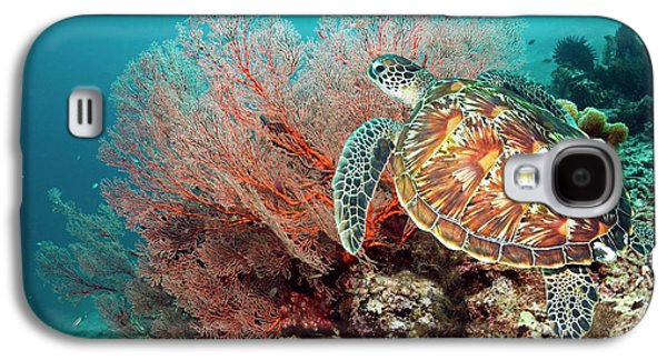 Green Sea Turtle And Gorgonian Galaxy S4 Case by Georgette Douwma