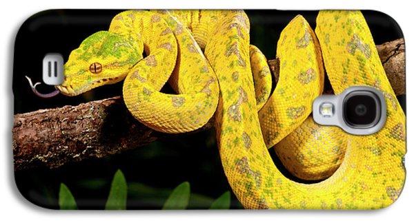 Python Galaxy S4 Case - Green Tree Python, Morelia by David Northcott