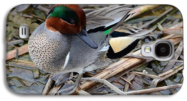 Green-winged Teal Galaxy S4 Case