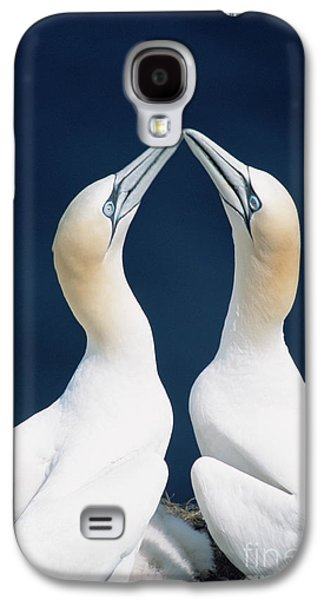 Greeting Northern Gannets Canada Galaxy S4 Case by