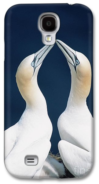 Greeting Gannets Canada Galaxy S4 Case