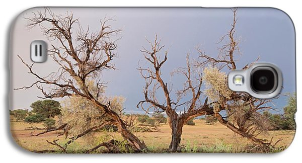 Grey Camelthorn Tree In The Auob Riverbed Galaxy S4 Case