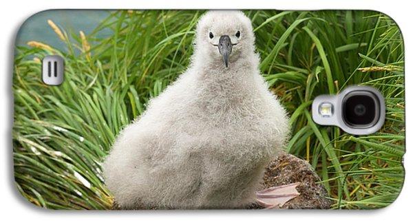 Grey-headed Albatross Chick Galaxy S4 Case by Yva Momatiuk John Eastcott