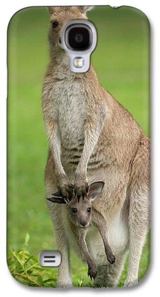 Kangaroo Galaxy S4 Case - Grey Kangaroo And Joey  by Yva Momatiuk John Eastcott