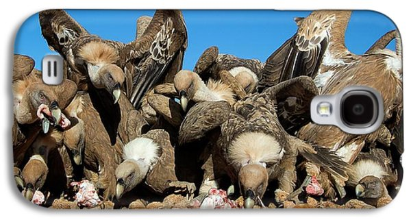 Griffon Vultures Feeding Galaxy S4 Case