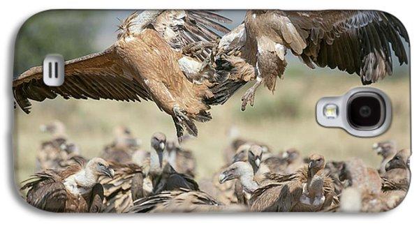 Griffon Galaxy S4 Case - Griffon Vultures by Nicolas Reusens
