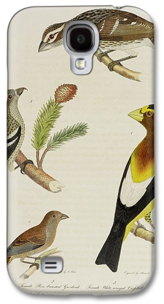 Crossbill Galaxy S4 Case - Grosbeak And Crossbill by British Library