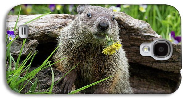 Groundhog  Kit Marmota Monax Galaxy S4 Case by Debbie Dicarlo
