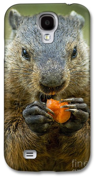 Groundhogs Favorite Snack Galaxy S4 Case by Paul W Faust -  Impressions of Light