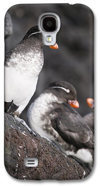 Group Of Parakeet Auklets, St. Paul Galaxy S4 Case by John Gibbens