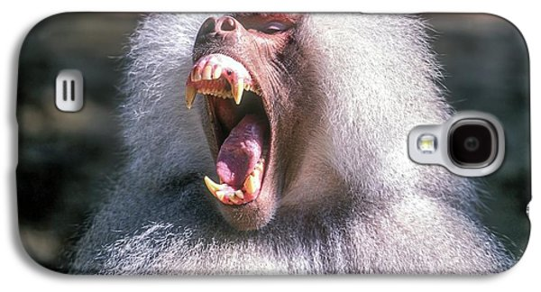 Growling Dominant Male Hamadryas Baboon Galaxy S4 Case by Photostock-israel