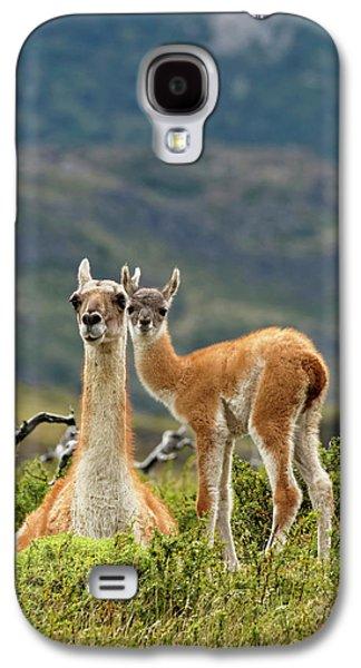 Llama Galaxy S4 Case - Guanaco And Baby (lama Guanaco by Adam Jones