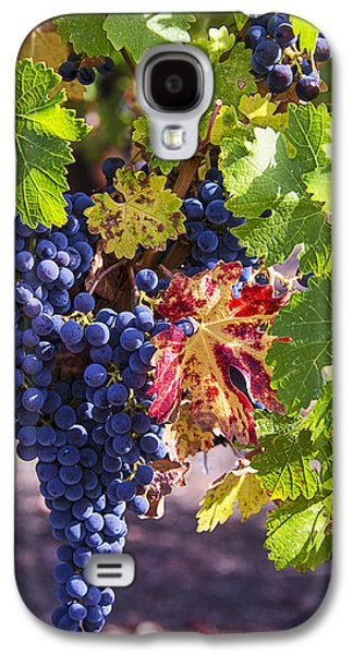 Hanging Grapes Galaxy S4 Case by Garry Gay