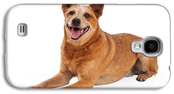 Happy Red Heeler Dog Laying  Galaxy S4 Case by Susan Schmitz