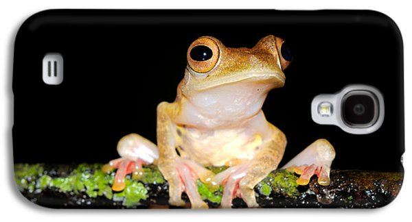 Harlequin Flying Frog, Malaysia Galaxy S4 Case by Fletcher & Baylis