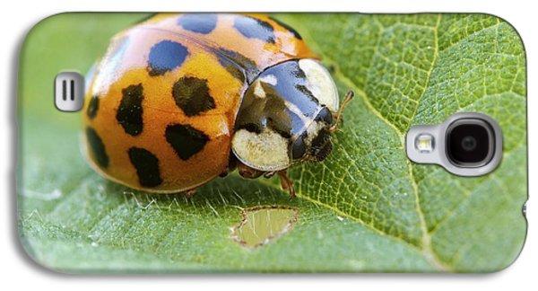 Harlequin Ladybird Galaxy S4 Case by Heath Mcdonald
