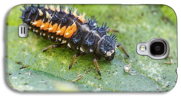 Harlequin Ladybird Larva Galaxy S4 Case by Heath Mcdonald