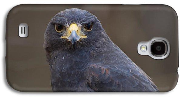 Harris Hawk Galaxy S4 Case