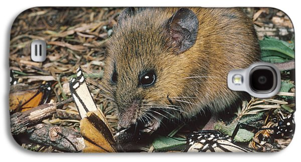 Harvest Mouse Feeds On Monarchs Galaxy S4 Case