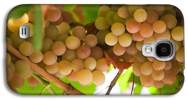 Harvest Time. Sunny Grapes II Galaxy S4 Case by Jenny Rainbow