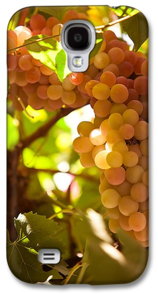 Harvest Time. Sunny Grapes IIi Galaxy S4 Case by Jenny Rainbow