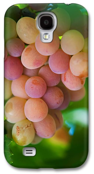 Harvest Time. Sunny Grapes Galaxy S4 Case by Jenny Rainbow