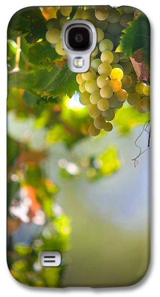 Harvest Time. Sunny Grapes V Galaxy S4 Case by Jenny Rainbow