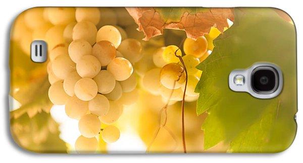 Harvest Time. Sunny Grapes Vi Galaxy S4 Case by Jenny Rainbow